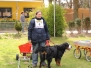 Zughundeprüfung April 2012