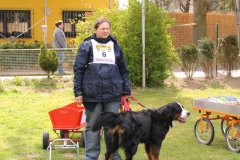 Zughundeprüfung_2012_007