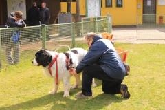 Zughundeprüfung_2012_013