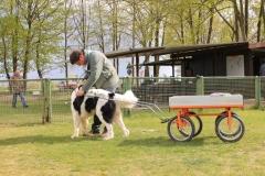Zughundeprüfung_2012_017