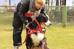 Zughundeprüfung_2012_019