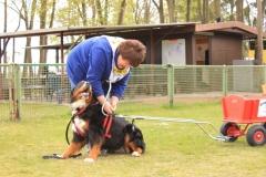 Zughundeprüfung_2012_026